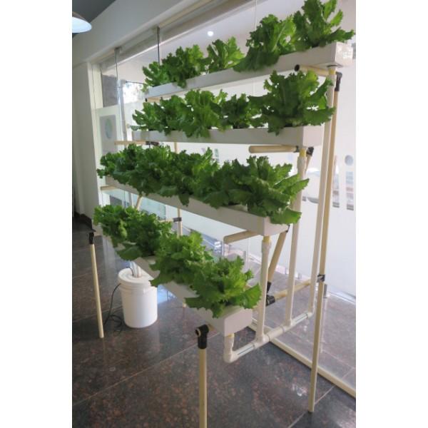 Hydroponics - Half Pyramid System (40 plants)