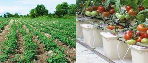 Soil vs Soil less crop production